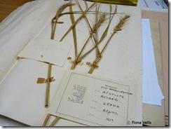 Kampjun mill-erbarju tal-Gonna Botanici tal-Argotti  - 2