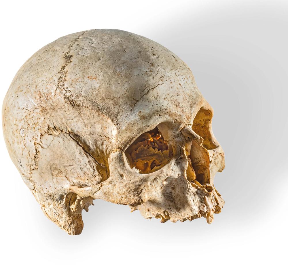 Ras ta' skeletru li nstabet fl-Ipogew ta' Hal-Saflieni (Ritratt - Daniel Cilia).jpg