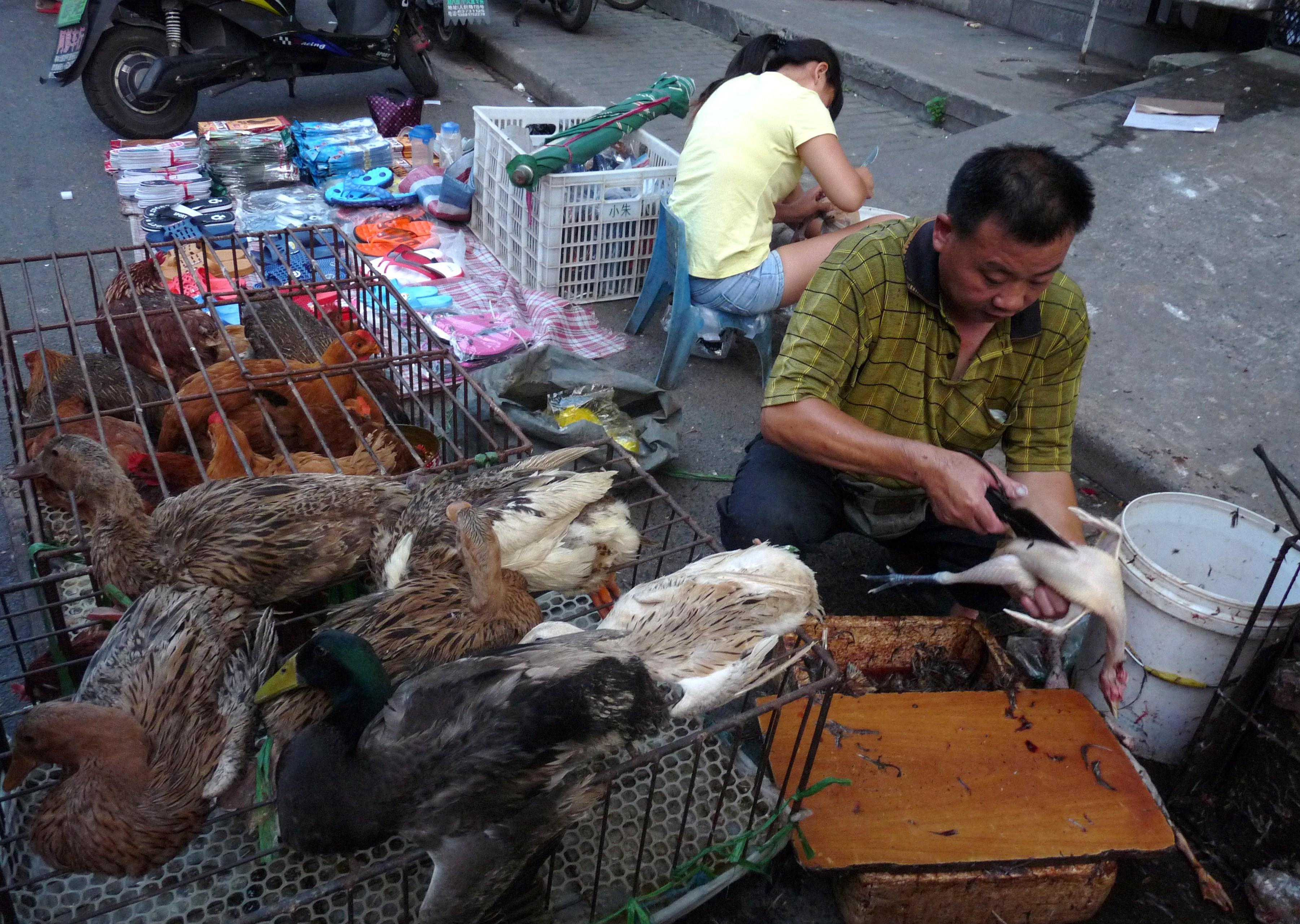 A poultry seller in Shanghai.JPG