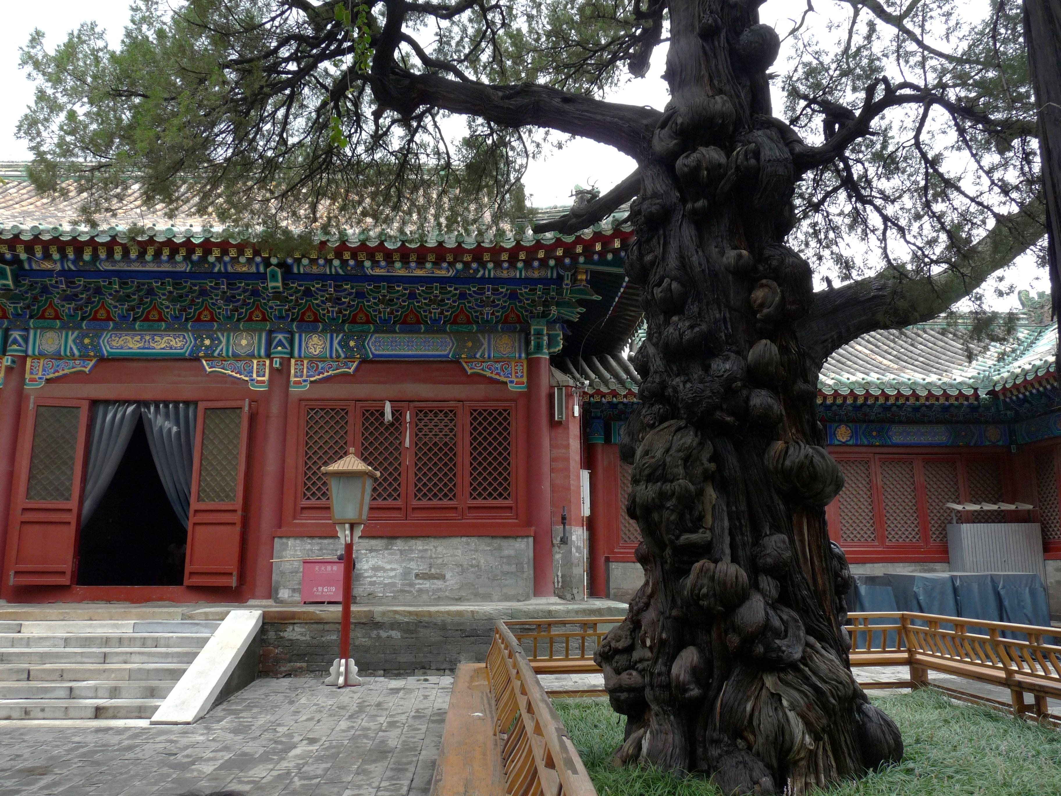 Sigar antiki jsebbhu t-Tempju ta' Konfucju.JPG