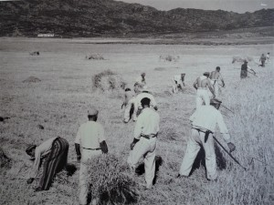 Prisoners working in the fields of Asinara (Photo courtesy Gian Piero Silvetti)